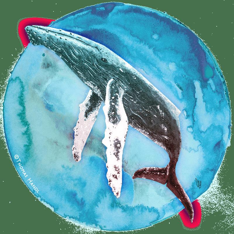 Wal Artwork für Buchfortsetzung